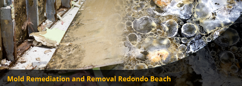 Mold Remediation and Removal Redondo Beach CA